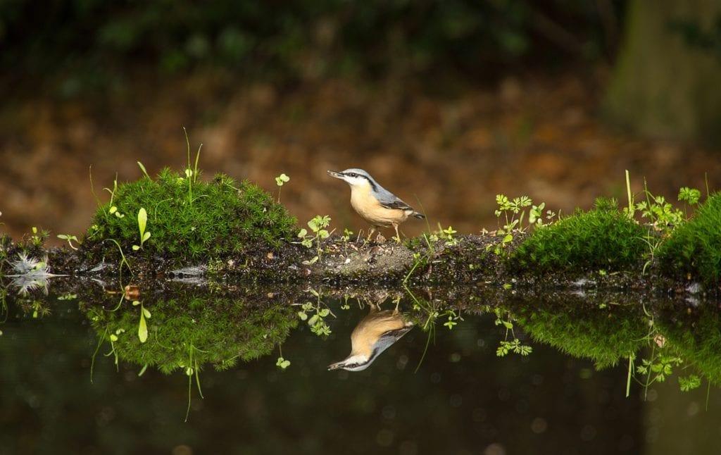 Wecker Naturgeräusche