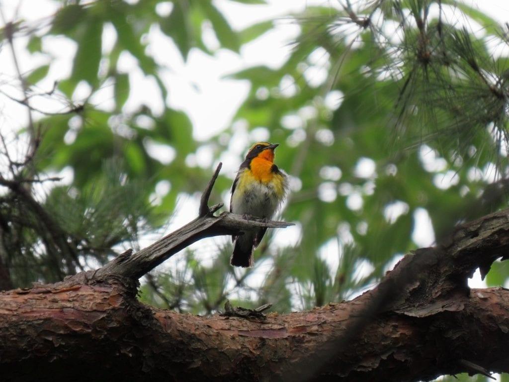 Wecker mit Naturgeräuschen - Vogelgezwitscher