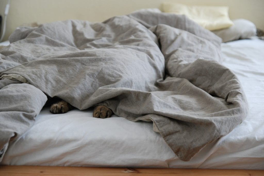 Wärme im Bett.