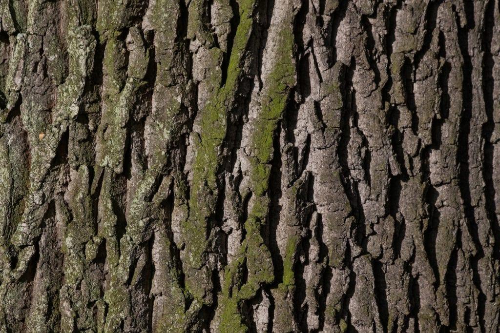 Boxspringbett - Holz