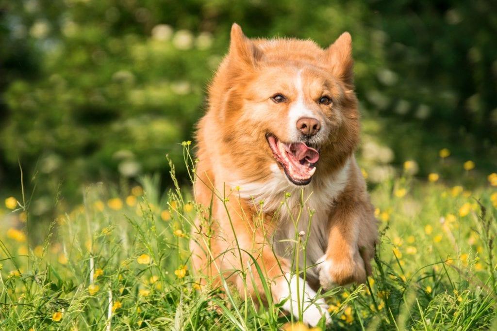 Hund - Rennen