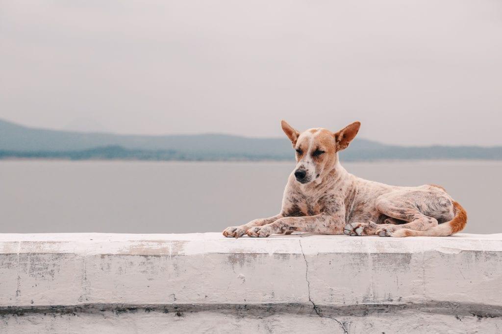 Hundereisebett - Urlaub