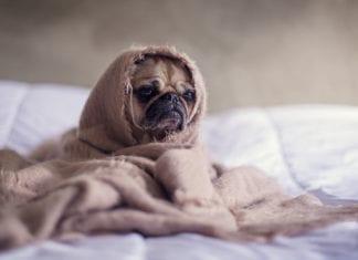 Wieviel Schlaf braucht ein Hund