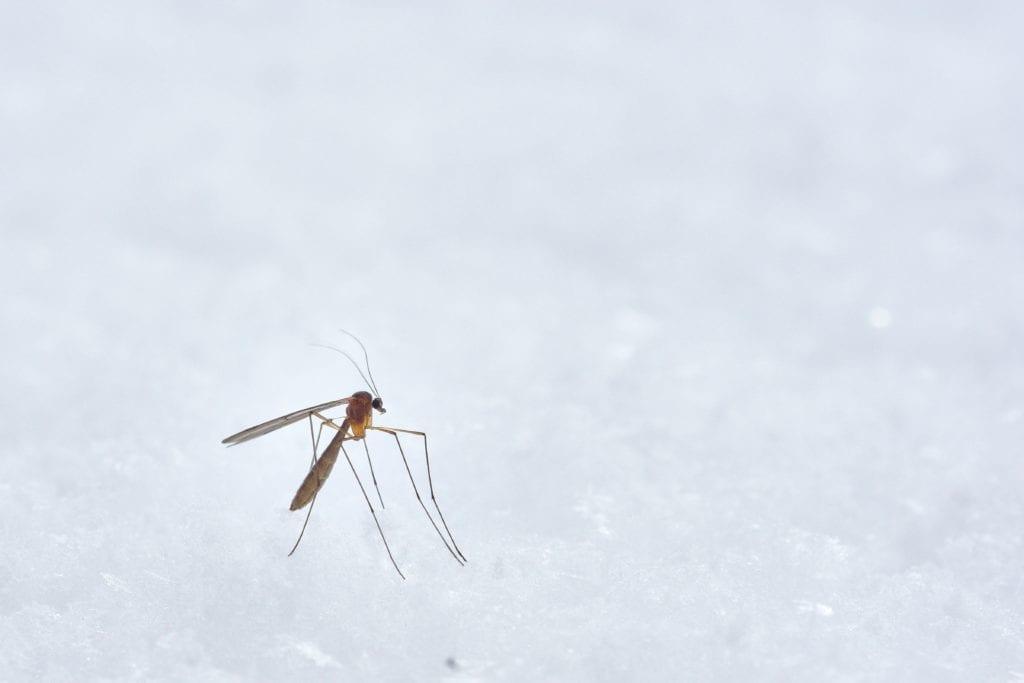 Mückenstiche - Jucken