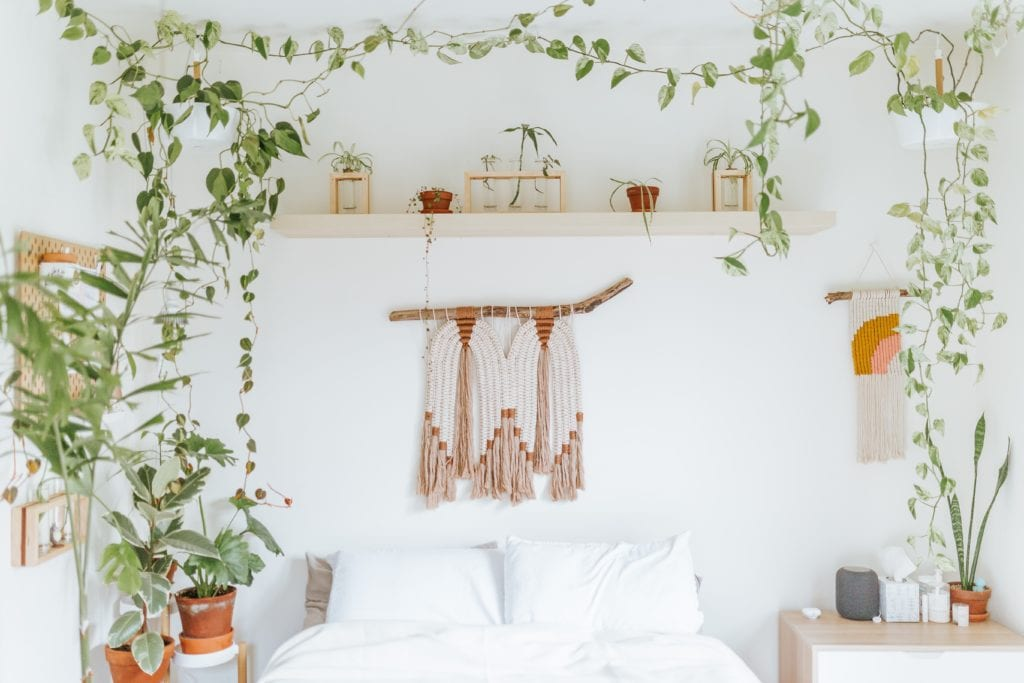 Pflanzen im Schlafzimmer - Schimmel