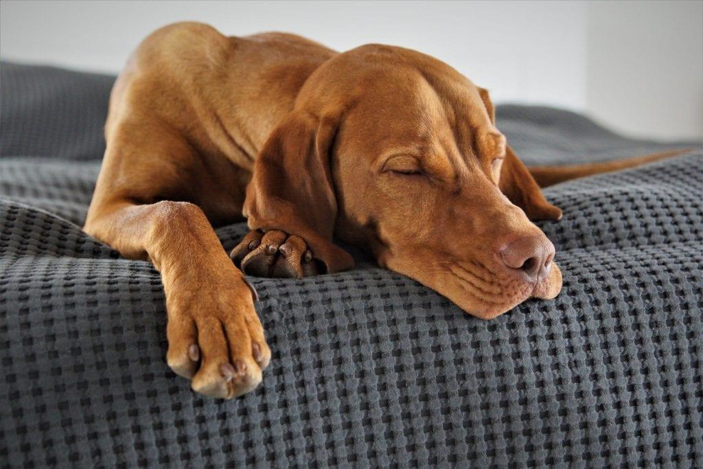 Hund - lange schlafen